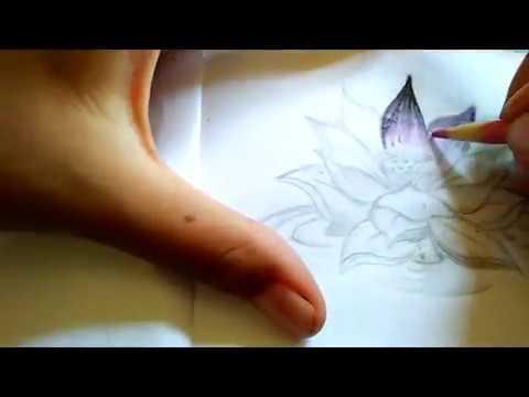 How To Draw A Lotus Flower Cara Membuat Sketsa Bunga Lotus Youtube