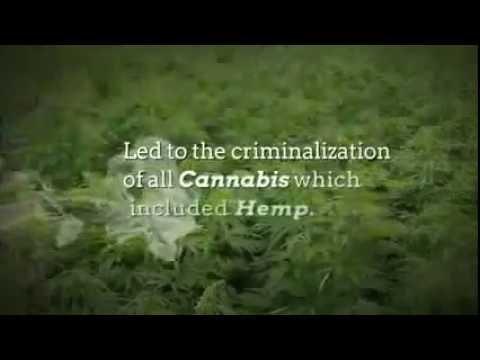CBD Hemp Oil Income Opportunity | Cannabis Network Marketing