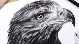 How to Draw Feathers: Drawing a Realistic Eagle Head