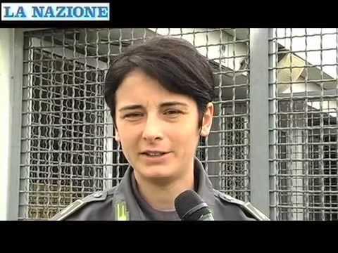 """Così """"lavorano"""" i cani della Finanza all'aeroporto di Firenze"""