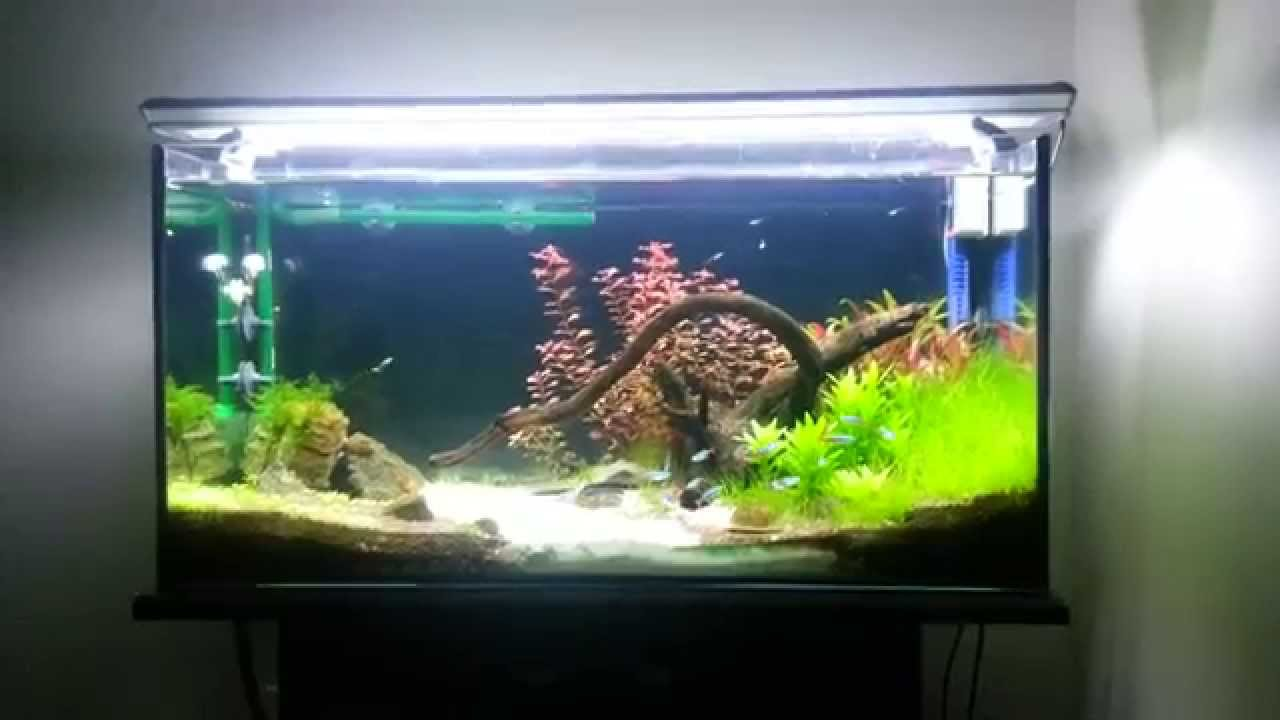 My 33 Gallon fish tank. just 3 months old - YouTube