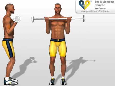 Ejercicios: Biceps Braquial - YouTube