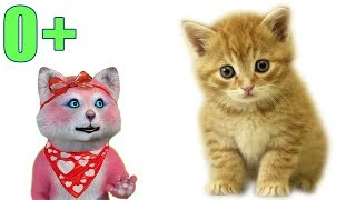 Домашние животные - карточки для детей (0+) - Няша Мурмяша