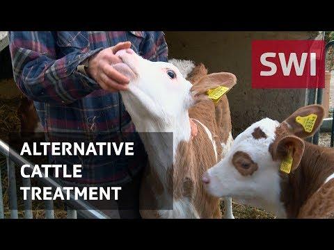 How to reduce antibiotics in livestock