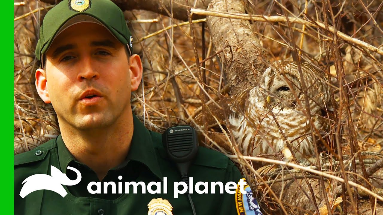CO Tries To Find Out Why Rescued Owl Can't Fly | North Woods Law