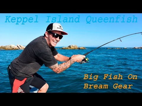 Keppel Island Fishing- Queenfish on Bream gear.. Huge fish on light 10lb line. Yeppoon QLD Australia