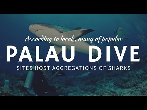 Best Diving Site for Shark and Marine Life Exploration – Palau