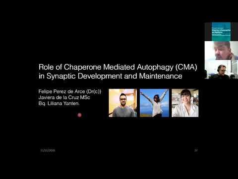 """Seminario Académico 11-11-2020: """"Autofagia Mediada por Chaperones..."""""""