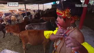 save cow save INDIA BEZUBAN ...TERIYAN GAUAN SINGER NILU BADSHA BHAIRVI STUDIO