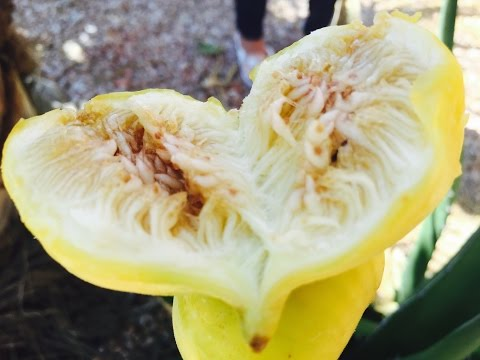 What are Honey Figs and why you should add this to your diet with Raihana's Cuisines