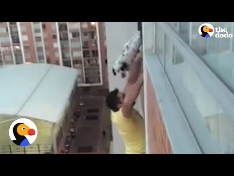 Dog Dangling from Balcony Rescued by Heroic Man | The Dodo