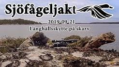 """Sjöfågeljakt 2019 09 21"""" Långhållsskytte på skarv"""""""