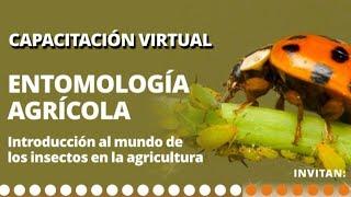 Eko Bojacá | Capacitación virtual | Entomología Agrícola