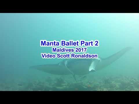 Maldives 2017: Manta Ballet 1, Sharks, Reef Life and even more Mantas II & III!