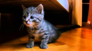 Niepełnosprawny kotek szuka domuu!!!