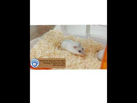 dăm bào gỗ thông sạch lót chuồng cho hamster yêu