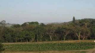 Farms For Sale in Tugela, Tugela, South Africa for ZAR R 4 200 000