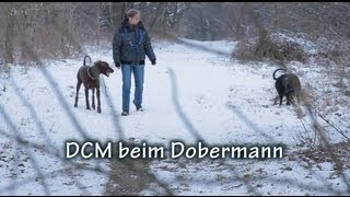 DCM beim Dobermann Full HD
