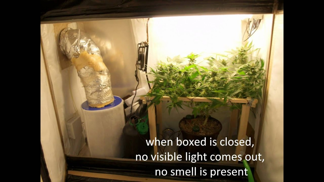 Super Stealth Carton Grow  YouTube