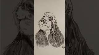 Рисунок Английский кокер спаниель.Цветные карандаши, анималистика.