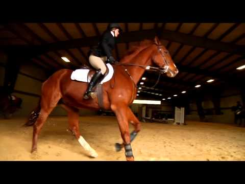 Equestrian Team Makes It Look Easy