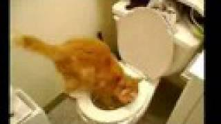 Toilet Train your cat to use human toilet! Weblink on right side!