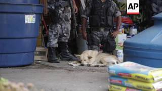 Animal victims of shootings in Rio favelas