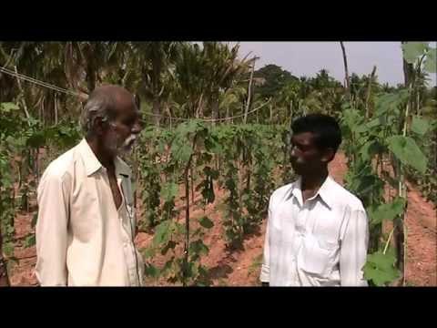 Organic  Vegetable Cultivation_Tumkur
