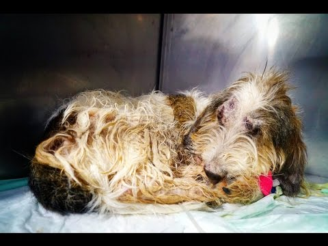 Amazing recovery of a dog thrown out of a speeding car