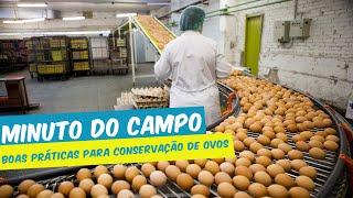 MINUTO DO CAMPO - BOAS PRÁTICAS PARA CONSERVAÇÃO DE OVOS