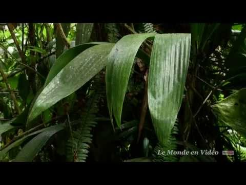 A walking tour  in the tropical jungle  in Martinique