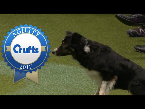 Agility - Crufts Singles Final - Small, Medium and Large (Part 2) | Crufts 2017