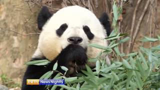 Bao Bao the Panda Leaves the U.S.