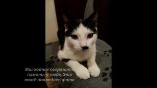 Памяти кота Марика посвящается