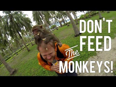 Crazy Monkey Feeding Frenzies  Monkey Island, Nha Trang, Vietnam 