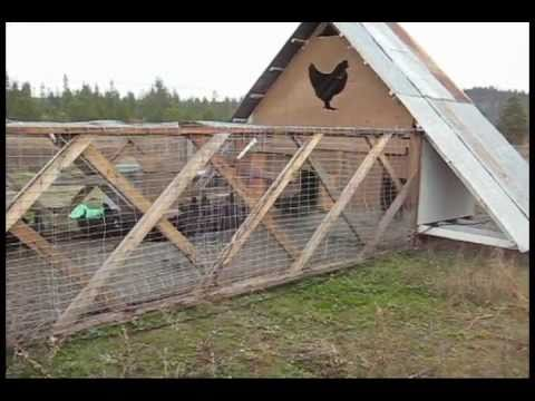 Monster chicken tractor youtube for Big chicken tractor