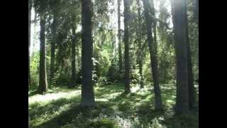 Лес на участке(, 2012-10-12T07:35:24.000Z)