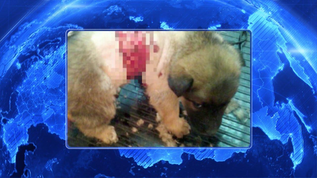 В Уфе подростки-живодёры едва до смерти не замучали щенка