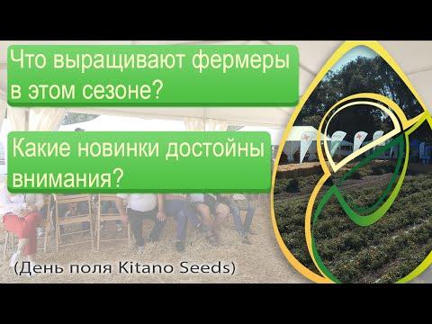 Что выращивают фермеры в этом сезоне? Какие новинки достойны внимания? (День поля Kitano Seeds)