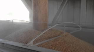 Loading Corn at CereServ