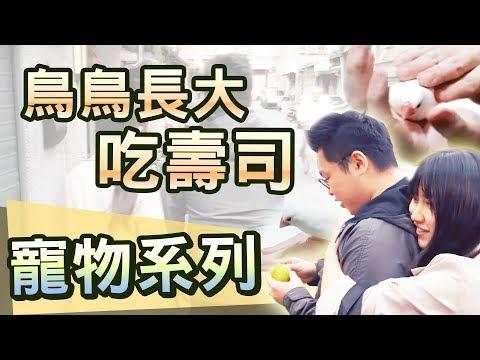 【寵物系列】#1 做水果小壽司給文鳥吃 feat. 阿醜、李迅、八毛