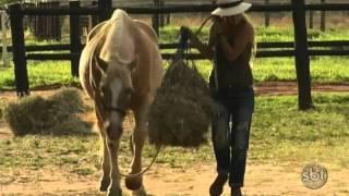 Caubói faz travessia do Canadá ao Brasil a cavalo