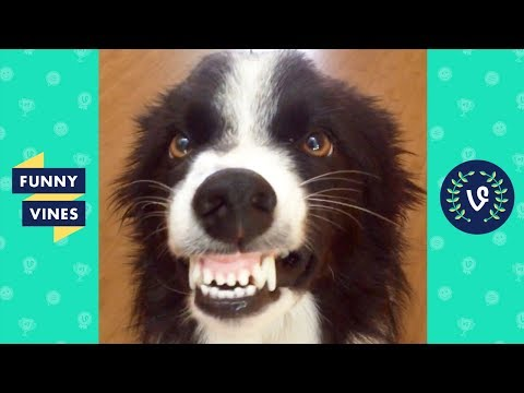 TRY NOT TO LAUGH - Funny Animals That Will Brighten Your Day!