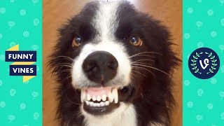 TRY NOT TO LAUGH - Funny Animals That Will Brighten Your Day