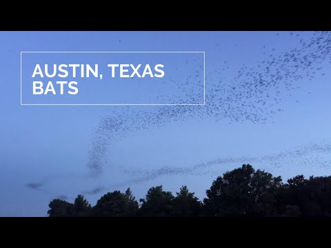 Millions of bats take flight over downtown Austin, Texas