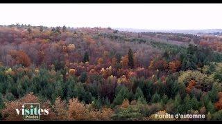 la forêt de tronçais visites privées