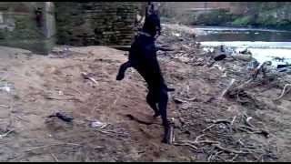 Mad Pad - Daft Dog Jumps And Swings Off A Tyre On A Rope !