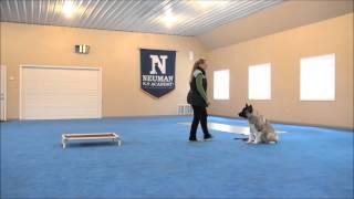 Captain (akita) Dog Training Demonstrational Video