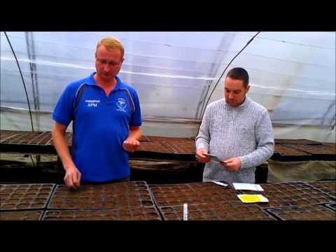 видео: Выращивание капусты ЛЕГАТ f1 (part 1)