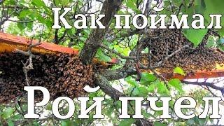 Поймал Рой Пчел. ЮМЗ в помощь. #СельхозТехника ТВ №24